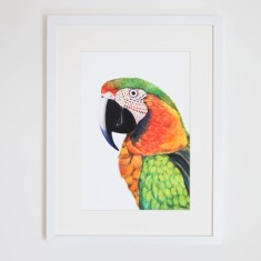 Percy the Parrot print