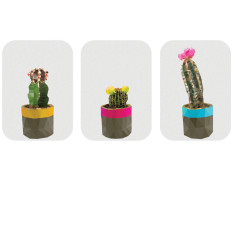 Geometric trio of cacti art prints