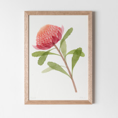 Waratah Watercolour Fine Art Print