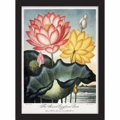 Sacred Lotus Print