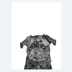 Black Pug Print