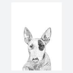 Bull Terrier Print