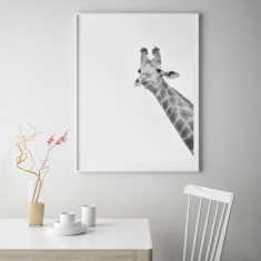 Giraffe Limited Edition Fine Art Print
