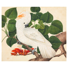 IXXI cockatoo wall art (multiple sizes)