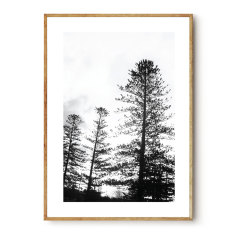 The Pines photographic wall art print