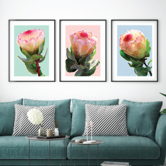 My protea garden art prints (set of 3)