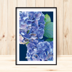 Hydrangea #1 art print (more colours)