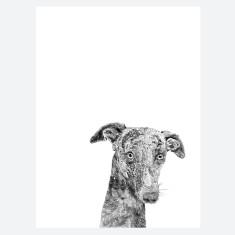 Whippet Print