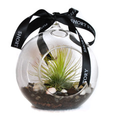 Life in a bubble air plant