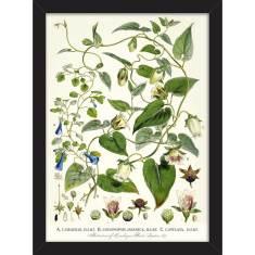 Bellflowers 1855 Print