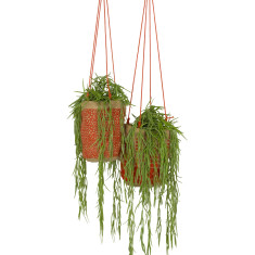 Hanging Pot Plant Holder - Mango