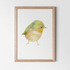 Silver Eye Finch Watercolour Fine Art Print