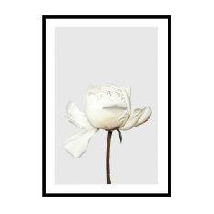 Peonia Flower Print