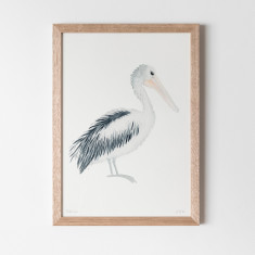 Pelican Watercolour Fine Art Print