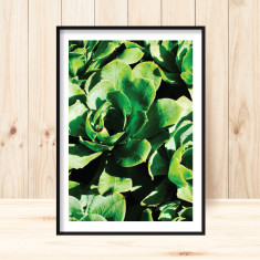 Succulents art print (various sizes)
