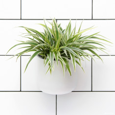Okidome suction planter in white