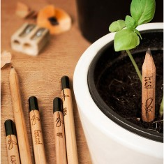 Set of Six Sprout Pencils