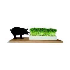 Smart 'n' green pig planter