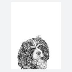 Cavalier King Charles Spaniel Print