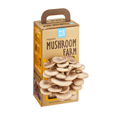 Edible Oyster Mushroom Growing Farm