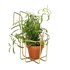 Base 212 small flower planter available in brass, copper or matt black