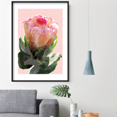 Protea blush art print (various sizes)