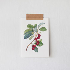 Pack of 4 Red Berry Botanical Watercolour Illustration Greeting Cards