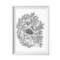Little bird black and white illustration print