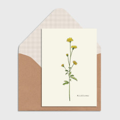 Wildflower Botanical Watercolour Illustration Greeting Cards (Pack of 4)