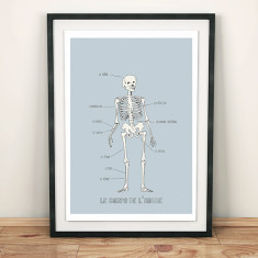 French anatomy print
