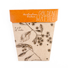 Golden Wattle Gift of Seeds