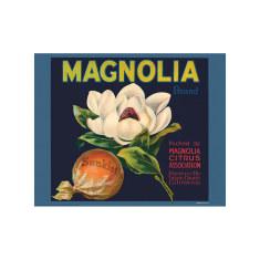 Magnolia Citrus Poster