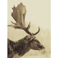 Stag off ready to hang canvas art