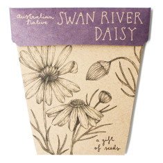 Swan river daisy seed packet