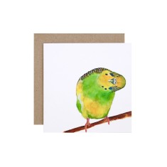Budgie Greeting Card (pack of 5)