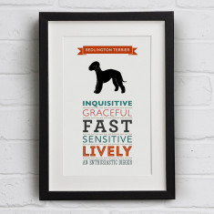 Bedlington Terrier Dog Breed Traits Print