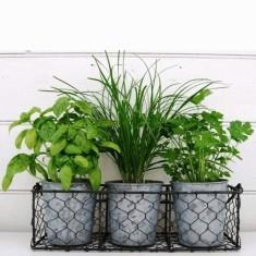 Italian herb set