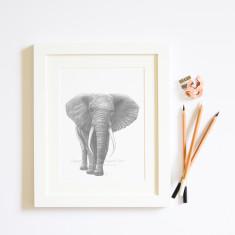 Elephant giclée print