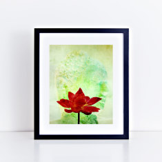 Buddha and lotus limited edition fine art giclee print