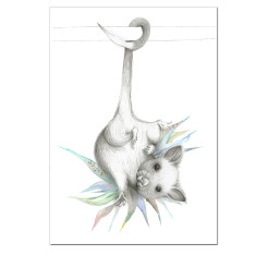 Possum Australiana Print