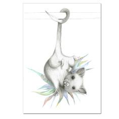 Possum Australiana Print