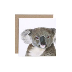 Koala gift card (pack of 5)