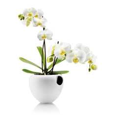 Eva Solo self watering orchid pot
