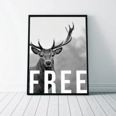 Free Monochrome Stag Art Print