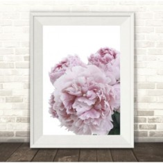 Peonies in Bloom