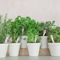 Set Of Six Personalised Vintage Herb Markers