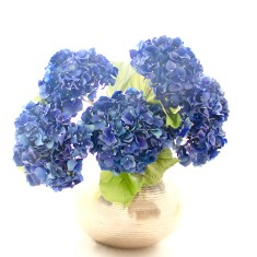 Dried hydrangea bouquet