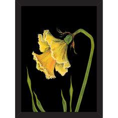 Botanical Jonquil Print