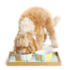 Pet Dining Tray - Stripes