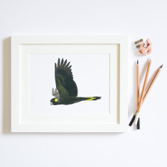 Black Cockatoo illustration print